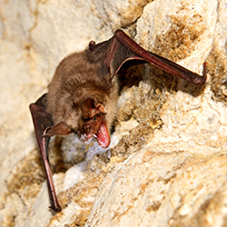 bat removal services Anchorage Alaska