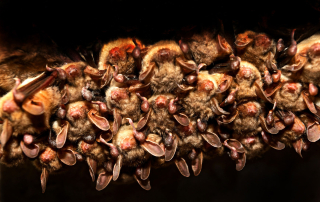 The Dangers of Bat Guano In Your Wisconsin Home