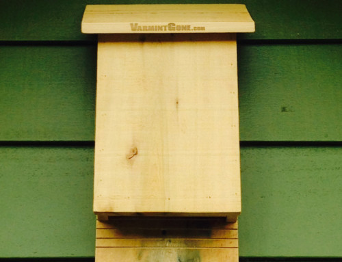 Benefits of Installing Bat Houses