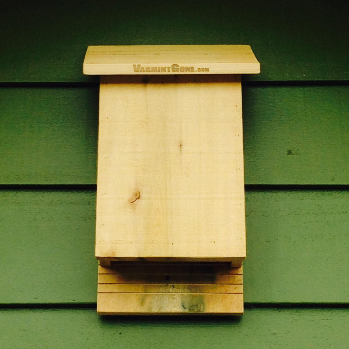 Benefits Of Installing Bat Houses