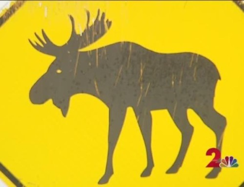 Suspected Moose Attack Woman Found Dead Outside Wasilla Home