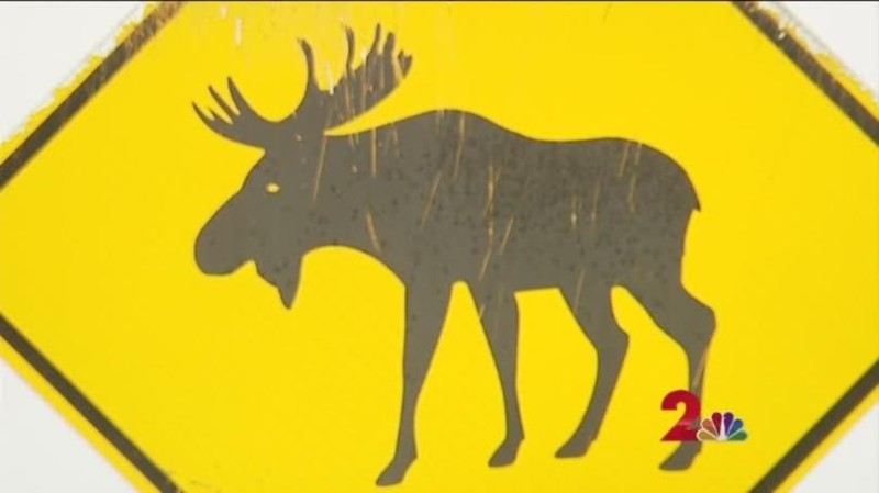 Suspected Moose Attack Woman Found Dead Outside Wasilla Home