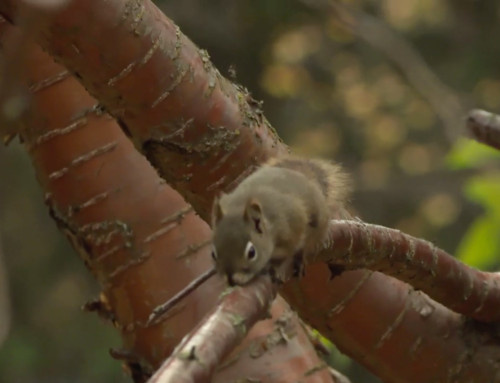Varmint Gone Squirrel Removal Featured On Nat Geo Wild